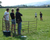 The Shepherd and Sheep Team Building Game